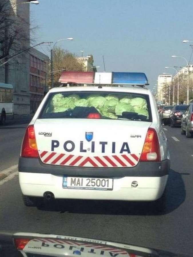 капуста в полицейской машине