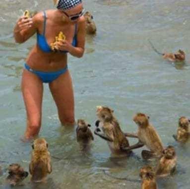 девушка и нападение обезьян