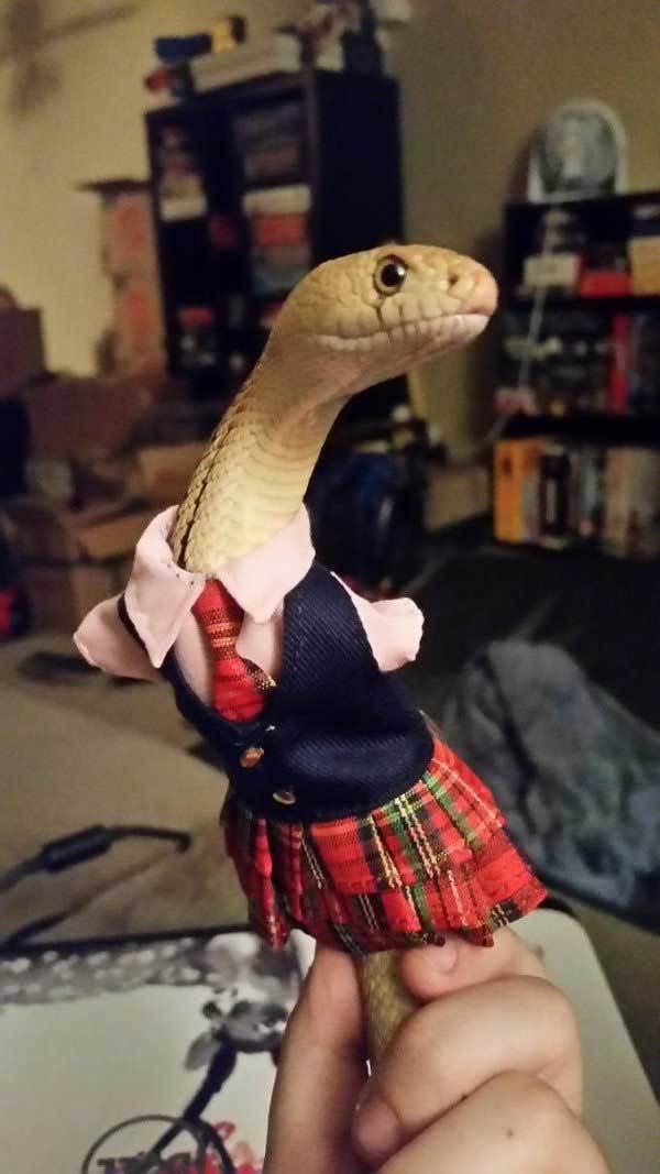 змея в костюме