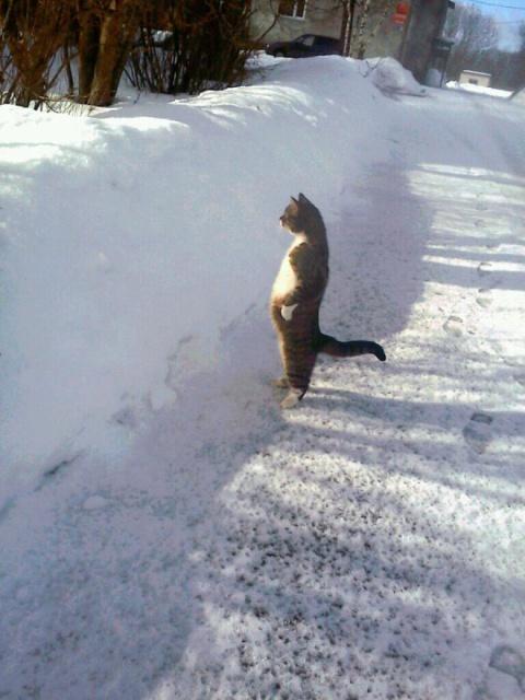 кот стоит на двух лапах