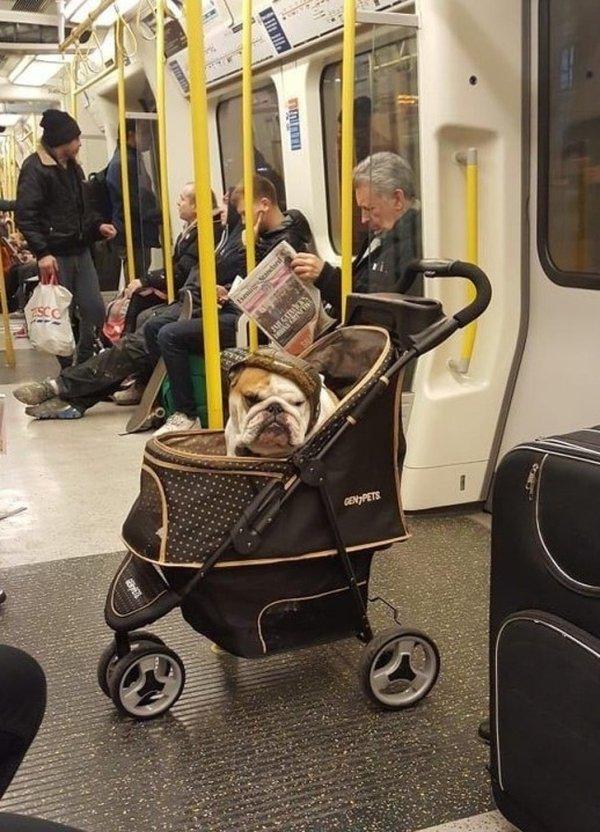 собака в детской коляске в метро