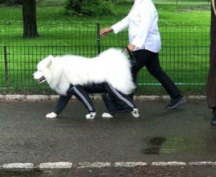 пес в спортивных штанах