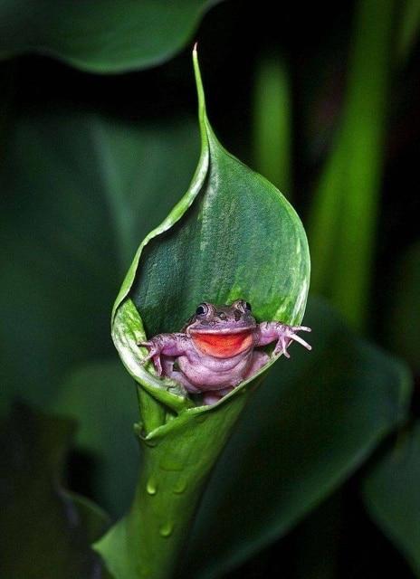 жаба в цветке