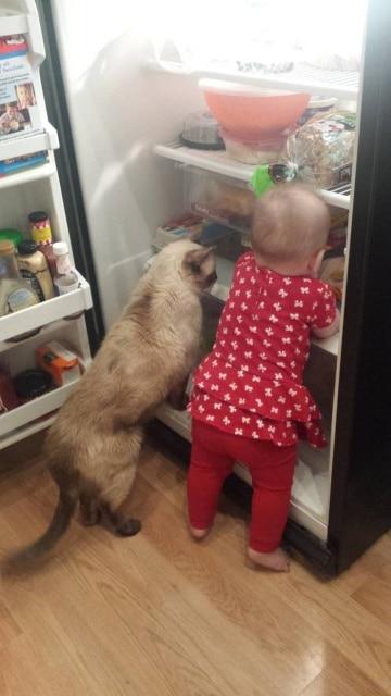 девочка и кошка у холодильника