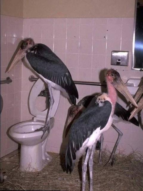 птицы в туалете