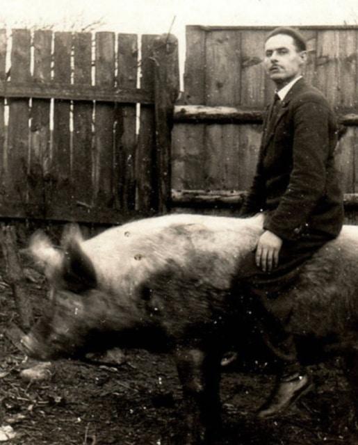 мужчина на свинье