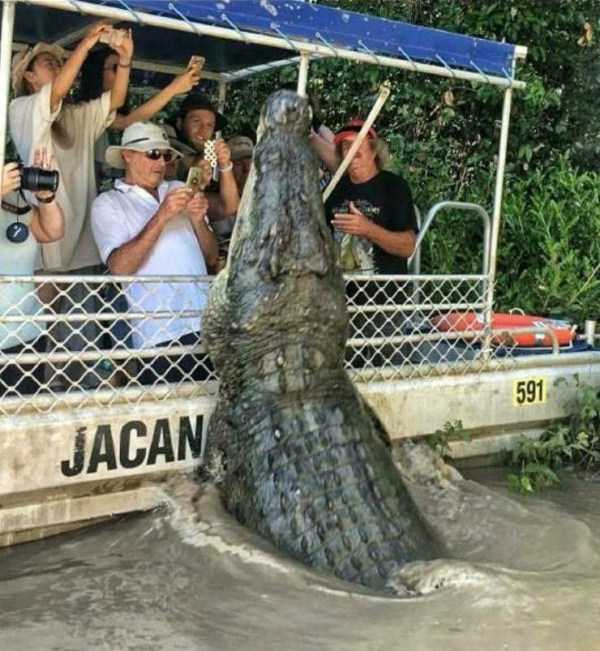 люди фотографируют аллигатора