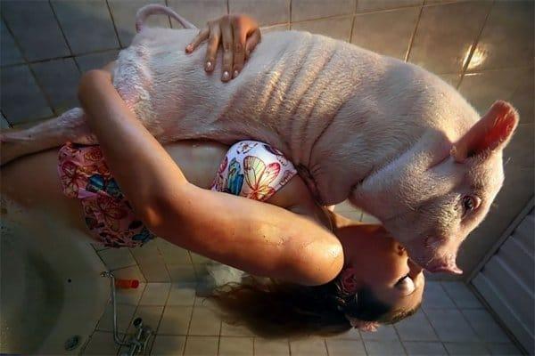 девушка в обнимку со свиньей