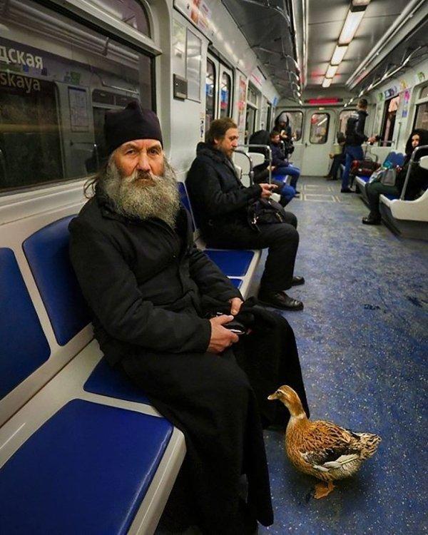 священник с уткой в метро