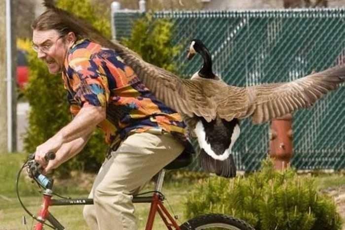 нападение утки