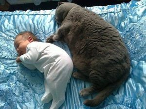 толстый серый кот спит рядом с младенцем