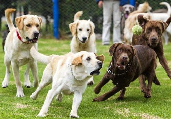 собаки ловят мяч