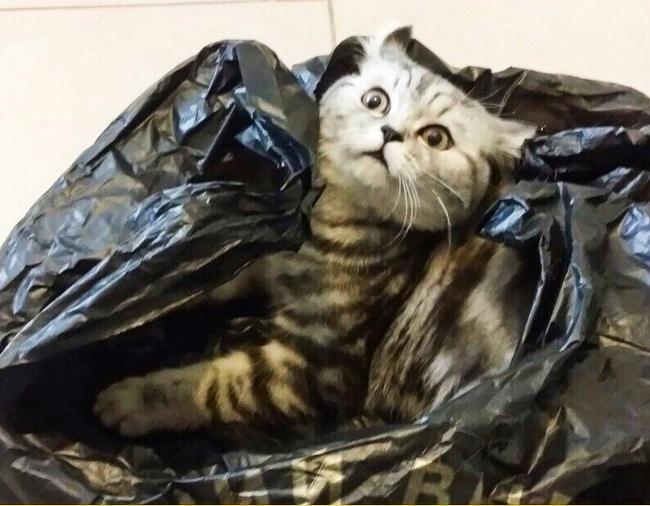 полосатый кот в пакетах