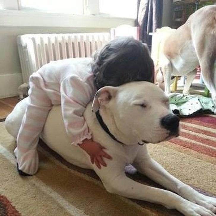 девочка спит на собаке