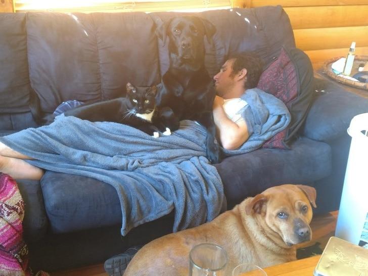 парень спит на диване в окружении животных