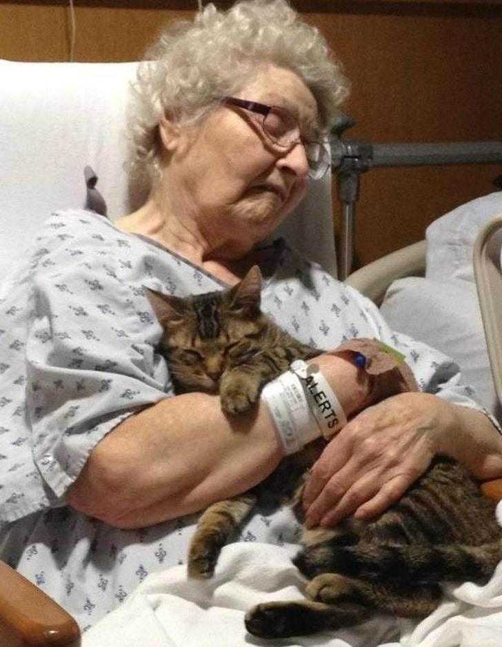 старушка обнимает кота