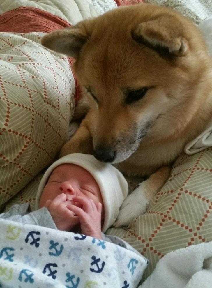собака рядом со спящим ребенком