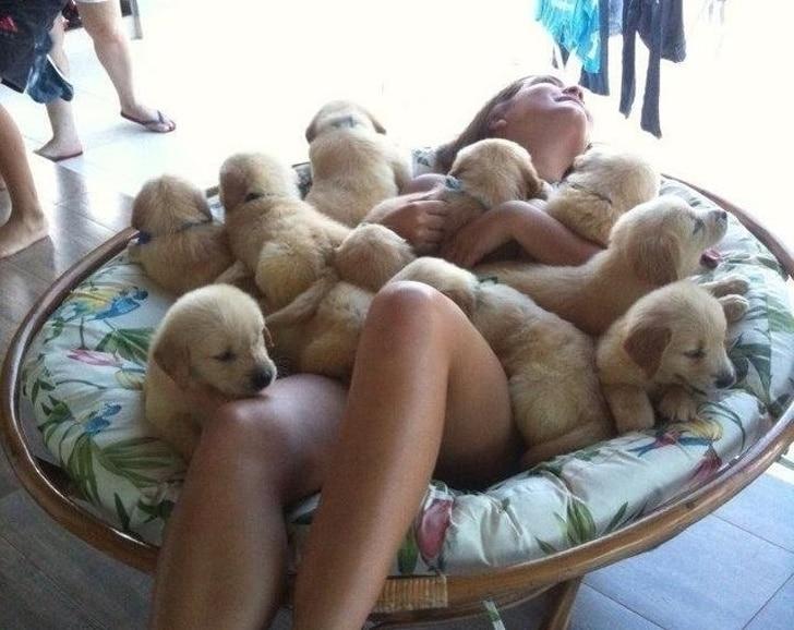 девушка в окружении щенков