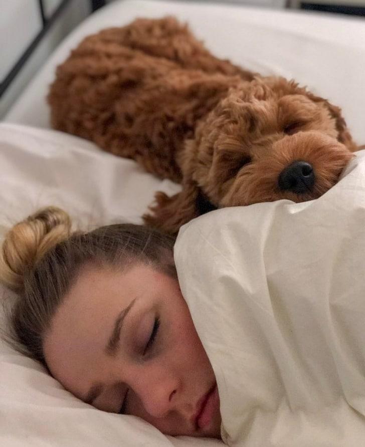 собака спит рядом с девушкой