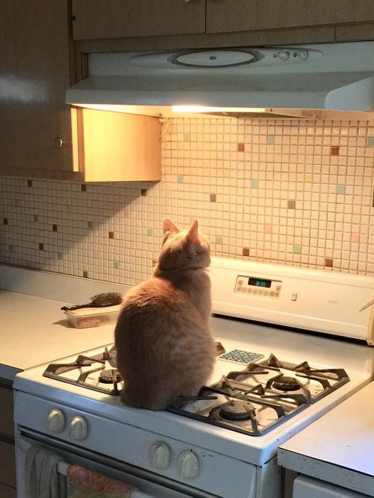рыжий кот сидит на газовой плите