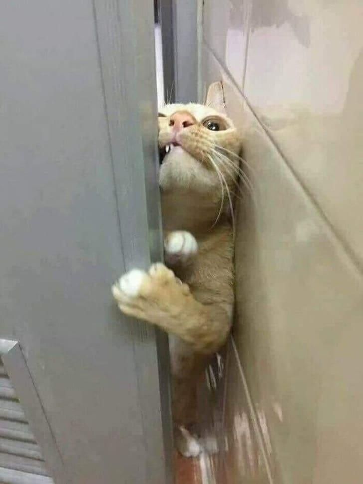 кот протискивается в дверь