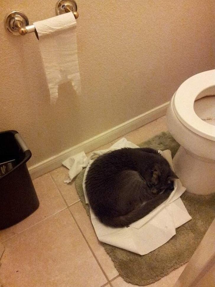 кот спит на туалетной бумаге