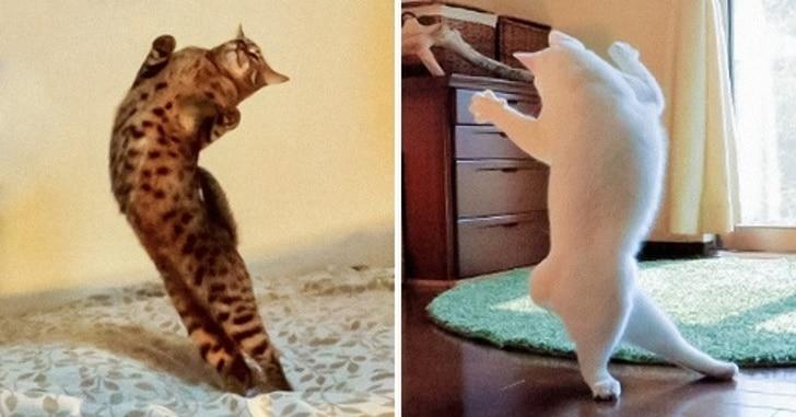 коты стоят на задних лапах