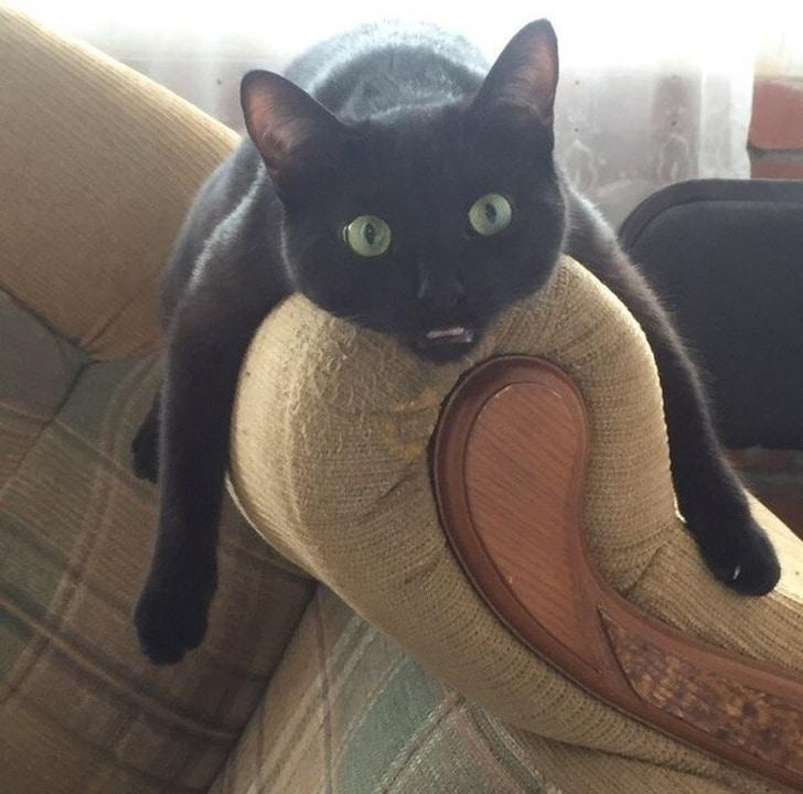 черный кот лежит на спинке кресла