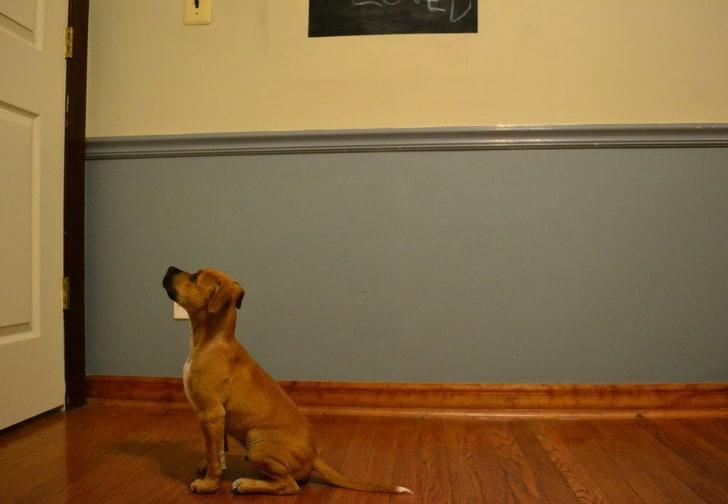 собака смотрит на дверь