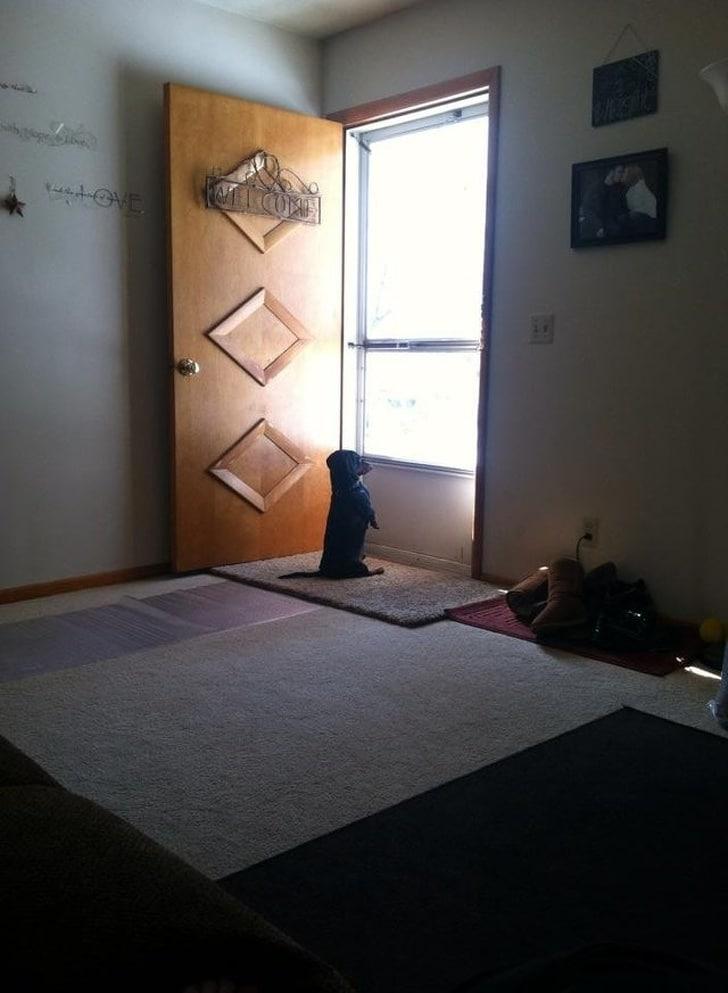 собака сидит под дверью