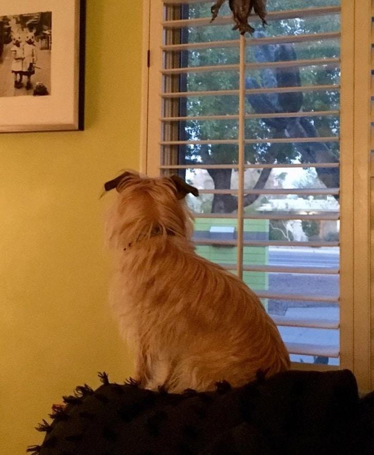 собака сидит возле окна