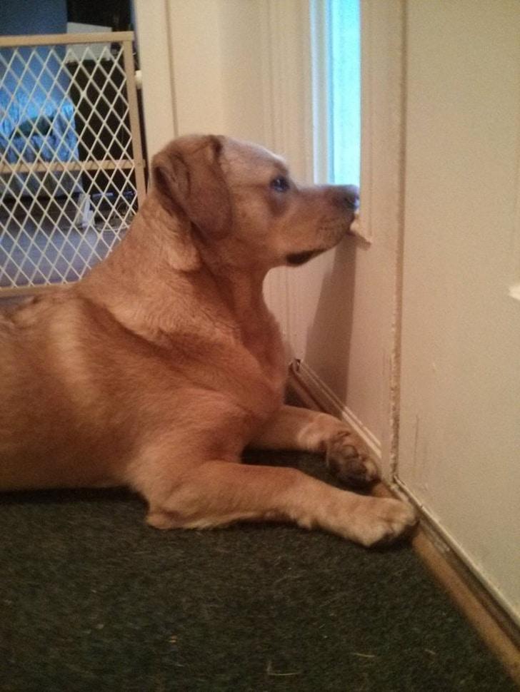 собака лежит под дверью