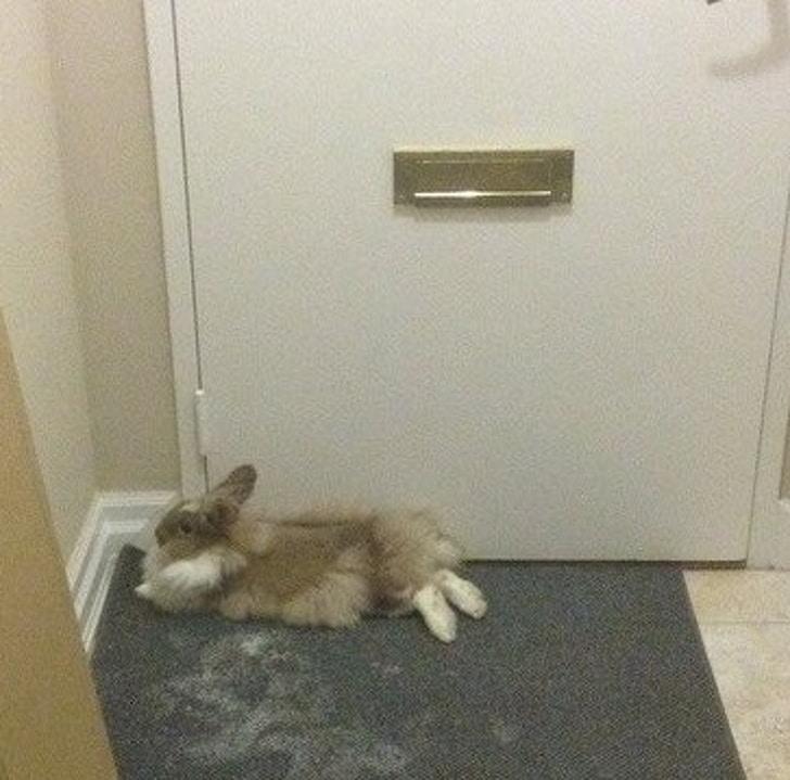 кролик лежит под дверью