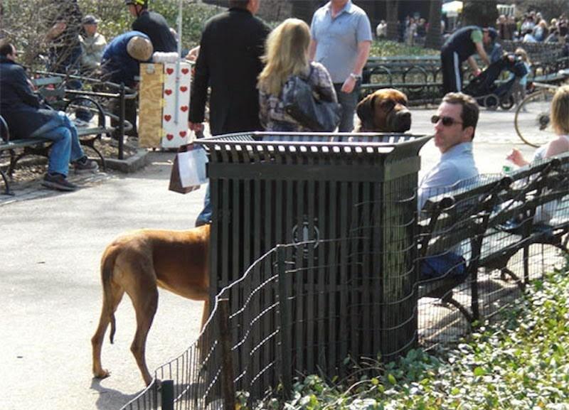 собаки и хозяин