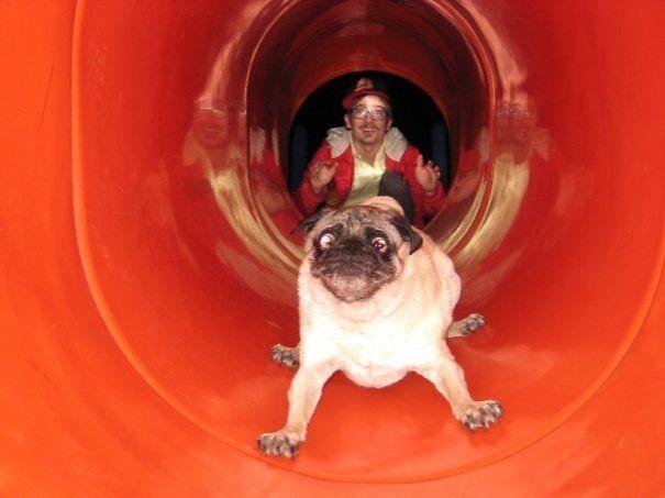пес в трубе