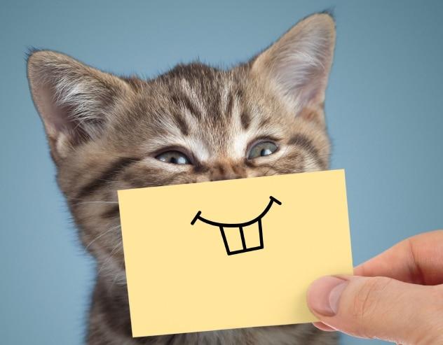 котенок с нарисованными зубами