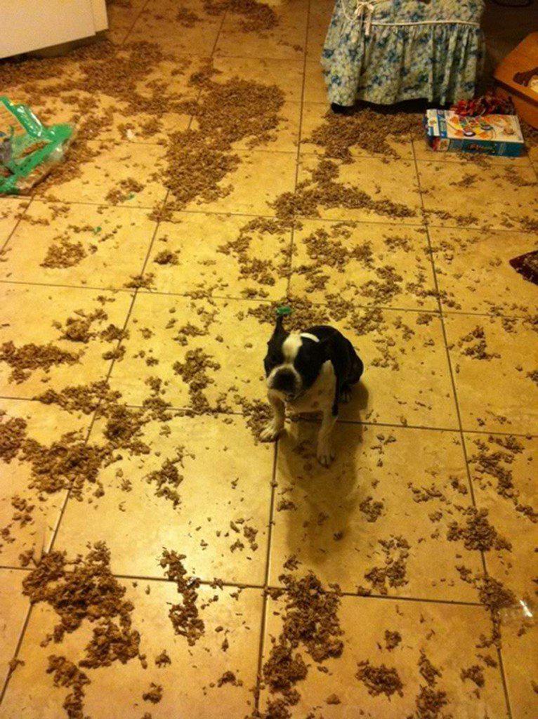 пес устроил бардак