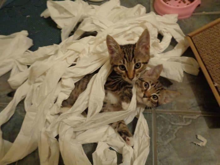 коты и туалетная бумага