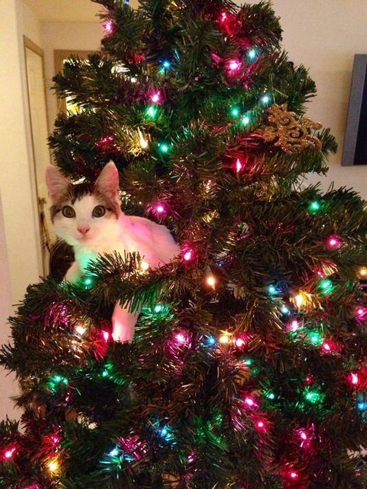 кот на елке