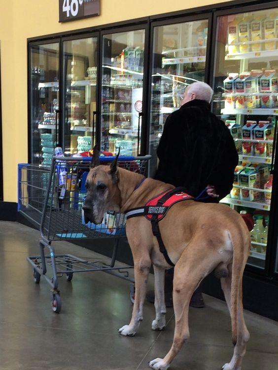 пес и хозяин в магазине
