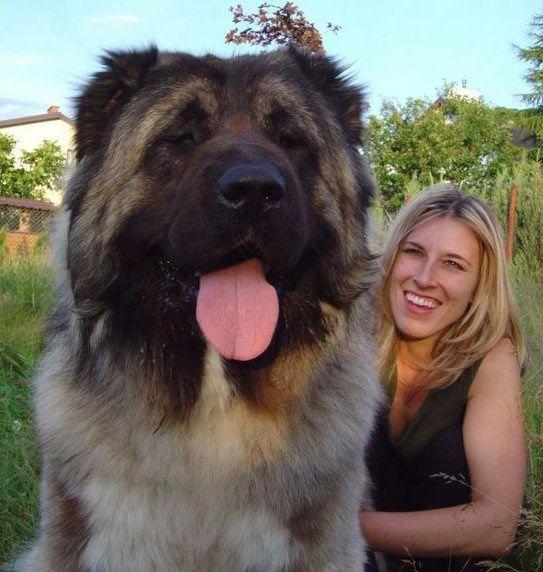 девушка и огромная собака