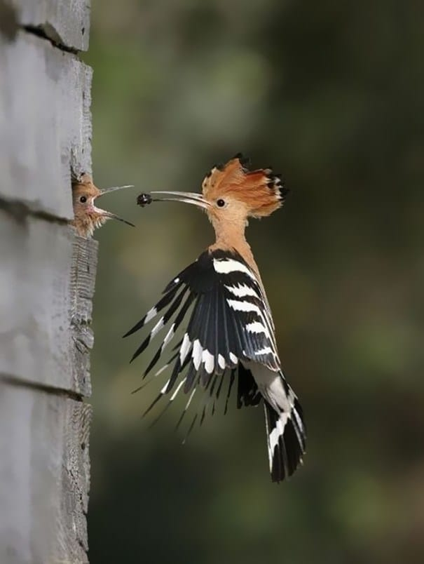 птица кормит птенца