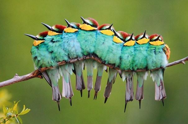цветастые птицы
