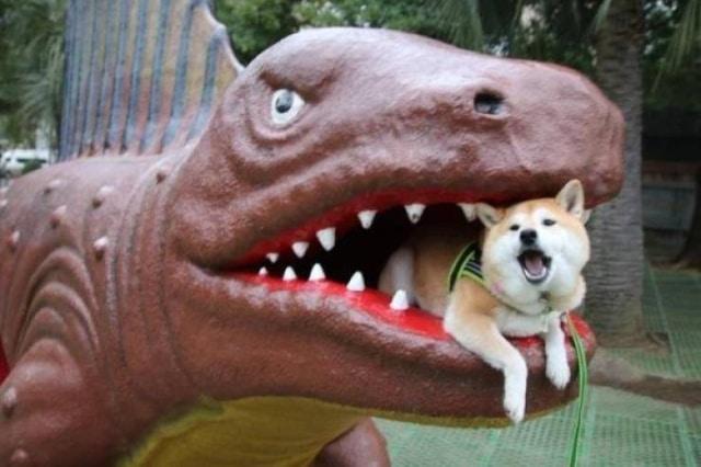 собака в пасти у динозавра