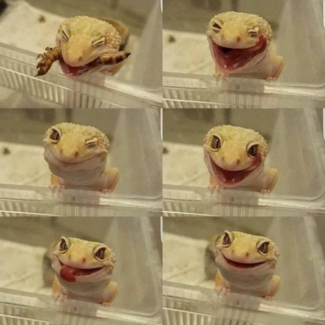 позитивная ящерица