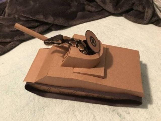 змея в танке