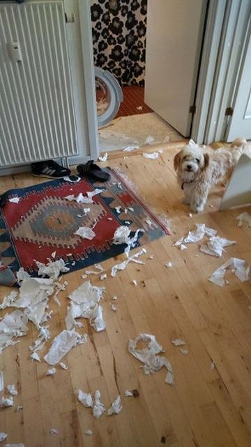 пес и порванная бумага