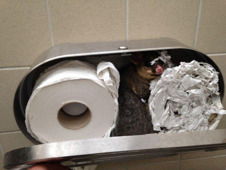 Поздравлением день, смешные фото с туалетной бумагой