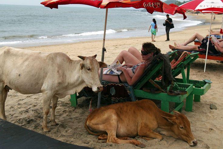 животные на пляже