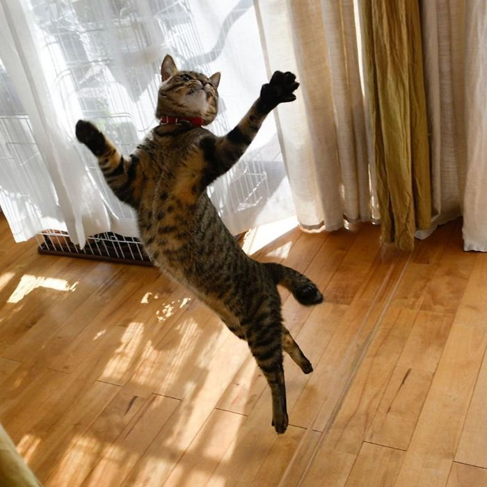 полосатый кот в воздухе